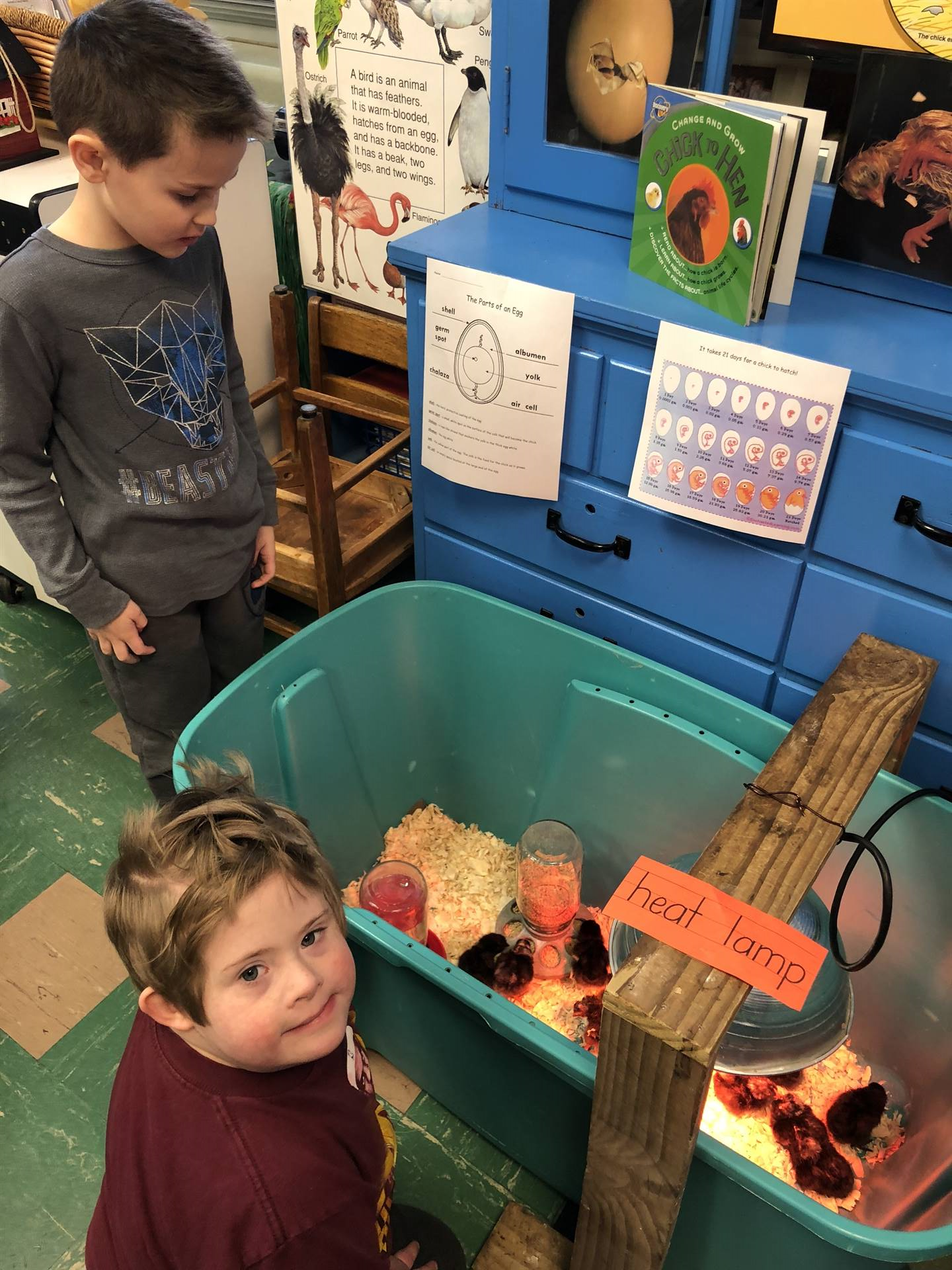 Mrs. Smith's kindergarten class had 31 chicks hatch.